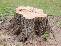 Tree Stump Removal Exeter Devon